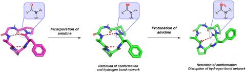 Amidine Functionality As a Conformational Probe of Cyclic Peptides